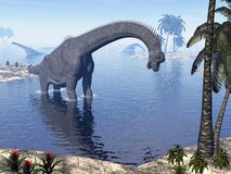 Brachiosaurus dinosaur in water - 3D render Royalty Free Stock Image