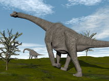 Brachiosaurus dinosaurs walk - 3D render Stock Photos