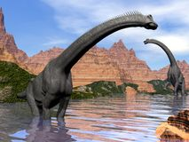 Brachiosaurus dinosaurs in water - 3D render royalty free illustration