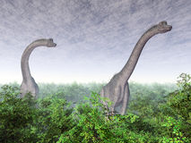 Brachiosaurus do dinossauro Fotos de Stock Royalty Free