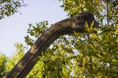 Brachiosaurus postać Zdjęcia Royalty Free