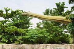 Brachiosaurus#2. Brachiosaurus is reaching on top of trees royalty free stock photo