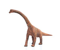 Brachiosaurus toy on white background Stock Image