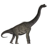 Brachiosaurus on White. Brachiosaurus was a herbivorous dinosaur that lived in the Jurassic Era of North America Royalty Free Stock Image