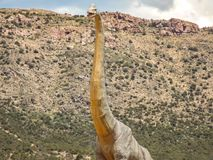 Brachiosaurusopwinding royalty-vrije stock foto