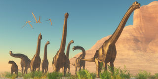 Brachisaurus Afternoon Stock Images