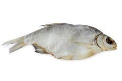 Brachsen, trockener Fisch Lizenzfreie Stockfotografie