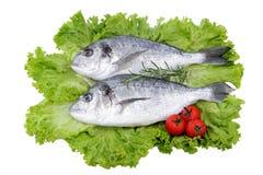 Brachsenfische auf weißem Hintergrund stockfotografie