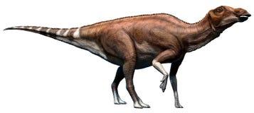 Brachylophosaurus Arkivfoto
