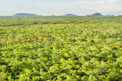 Полесья Brachystegia в национальном парке Kasungu Стоковое Изображение RF