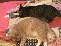 Braci koty Śpi Wpólnie na kołderce ilustracji