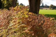 Bracken di autunno fotografie stock libere da diritti