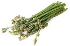 Bracken fern Royalty Free Stock Image
