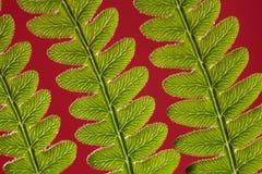 Bracken Fern Leaf Stock Photos