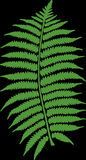 Bracken, Fern, Plant, Leaf, Leaves Royalty Free Stock Photos