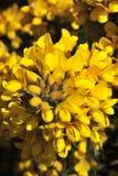 Bracken giallo Fotografia Stock