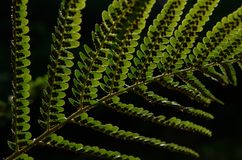 Bracken leaves Stock Photography
