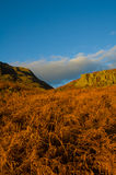 Bracken at Wasdale Royalty Free Stock Image