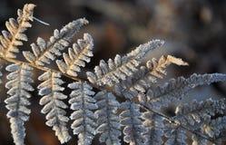 Bracken in winter stock image