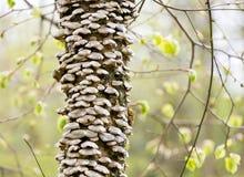 Bracket fungus stock images