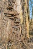 Bracket fungus on a tree bark from close Stock Image