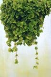Bracketplant Stock Image