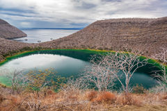 Brackish Lagoon in Galapagos Stock Image