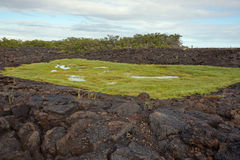 Brackish water in contact with the sea in the middle of a lava flow. The lava is eroded and broken with dimples, in the lake is lush vegetation Royalty Free Stock Photography