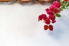 Bracts of bougainvillea glabra. Red and orange bracts of bougainvillea glabra Stock Photography