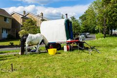 Bradford on Avon Wiltshire May 22nd 2019 An Irish cob/gypsy vanner grazing next to a plain vardo caravan