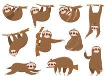 Bradipi svegli del fumetto Animali, madre e bambino adorabili della foresta pluviale sul ramo, animale divertente di bradipo che  illustrazione vettoriale