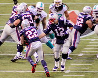 Brady hands off to Ridley. New England Patriots QB Tom Brady (12) hands off to Stephen Ridley (22 Stock Photography