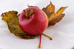Braeburn Apple and autumn leaves Stock Photo