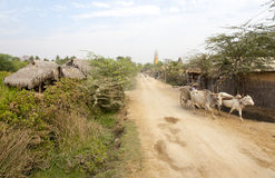 Cattle Cart on Dirt Road. Brahma cows walk old carts down a dusty road in the village of Hanlin, Myanmar Stock Photography