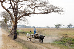 Cattle Cart in Dusty Landscape Stock Photo