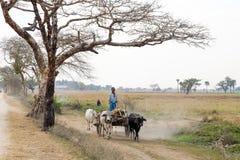 Cattle Cart in Dusty Landscape Stock Photo