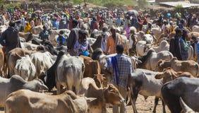 Brahmanu byk, Zebu i inny bydło przy jeden wielki bydlę rynek w rogu Afryka kraje, Babile Etiopia Zdjęcie Royalty Free