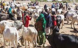 Brahmanu byk, Zebu i inny bydło przy jeden wielki bydlę rynek w rogu Afryka kraje, Babile Etiopia Obrazy Royalty Free