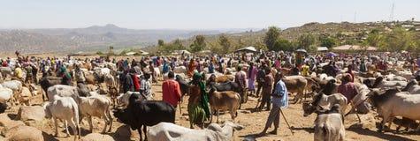 Brahmanu byk, Zebu i inny bydło przy jeden wielki bydlę rynek w rogu Afryka kraje, Babile Etiopia Zdjęcia Royalty Free