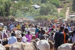 Brahmanu byk, Zebu i inny bydło przy jeden wielki bydlę rynek w rogu Afryka kraje, Babile Etiopia Obrazy Stock