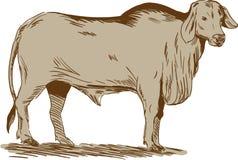 Brahmanu byka rysunek ilustracji