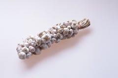 Braid of garlic bulbs . Stock Photography