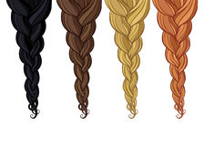 Braid of hair. Four different colors braided tresses royalty free illustration