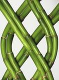 braided bambu Royaltyfri Fotografi
