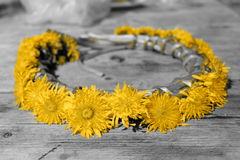 Braided dandelions forming a circle. On black and white background Royalty Free Stock Photography