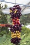 Braided ha colorato le ciliege - gialli, rosa, il rosso ed il nero fotografie stock libere da diritti