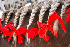 Braided horse mane with red bows. A horse's mane that is braided with several braids and they have red bows on the ends royalty free stock image
