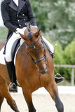 Braided mane for dressage sport horse during a dressage training Stock Photo