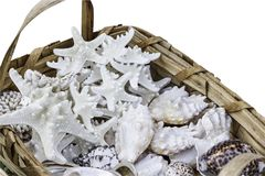 Braided straw basket full of starfish and shells, isolated on white. Stock Image