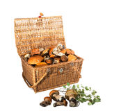 Braided Treasure Chest - mushrooms boletus. Isolated on white ba Stock Photography